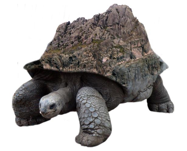 il più votato a buon mercato brillantezza del colore cerca le ultime Tartaruga gigante del deserto [Parte 1] – Il sito dell ...